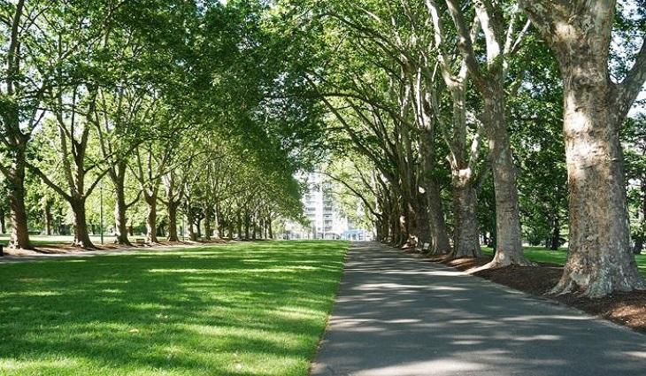 Viale alberato, esempio di riforestazione urbana